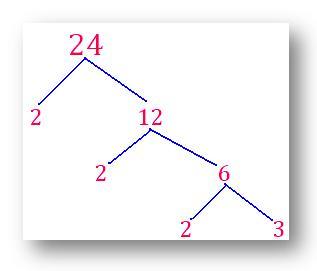 factor tree of 24