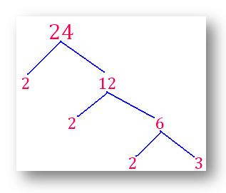 factor tree of 24