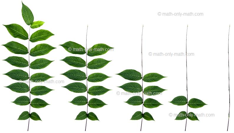 Reducing Shape Pattern Leaf